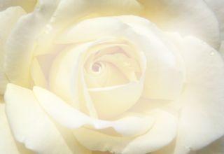 wedding_rosel0008